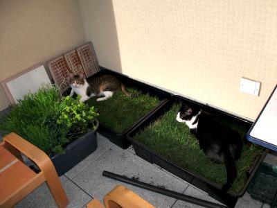Berichte sieben katzenleben e v - Rollrasen balkon ...