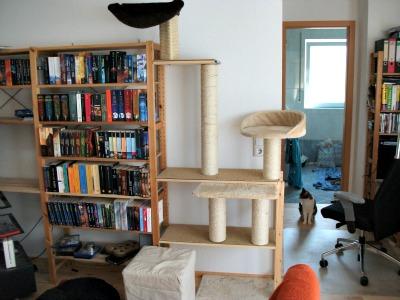 berichte sieben katzenleben e v. Black Bedroom Furniture Sets. Home Design Ideas