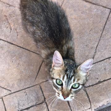 Wie heißt die katze von gargamel